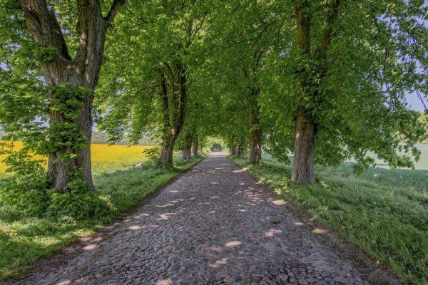Alte Bäderstraße auf der Insel Rügen